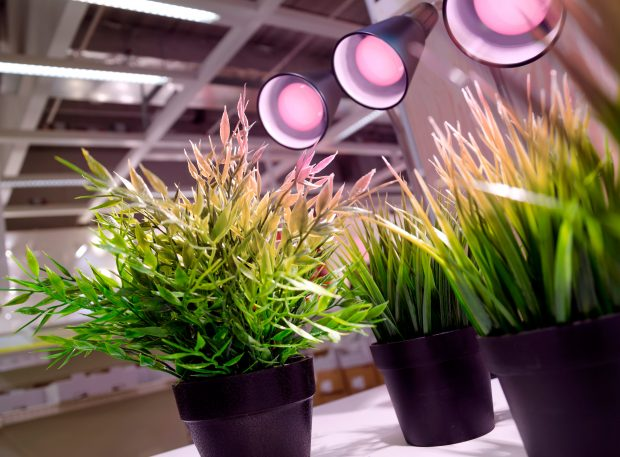 Beleuchtungssystem für Planzenwachstum für private und kommerzielle Anwendungen